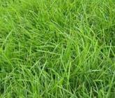 协调推进草原生态保护建设和草牧业绿色发展