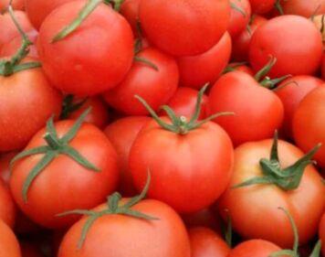 """9月5日""""农产品批发价格200指数"""""""