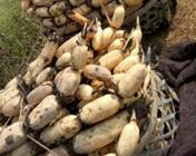 """9月8日""""农产品批发价格200指数"""""""