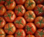 """9月11日""""农产品批发价格200指数"""""""