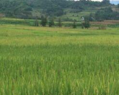 农民种田的又一个政策红包 轮作休耕补助来了