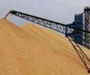 1517.11公斤!新疆玉米示范田创高产新纪录