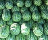 """11月14日""""农产品批发价格200指数"""""""