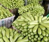 """11月22日""""农产品批发价格200指数"""""""