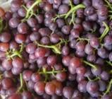 """12月12日""""农产品批发价格200指数"""""""