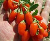 宁夏休闲农业蓬勃发展带动农民创业创收