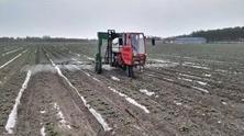 媒体人下乡创业:红薯的供给侧结构性升级