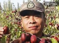 新疆生产建设兵团第一师副师长推介阿拉尔红枣
