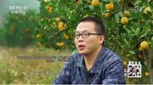 """一亩田产地发现:""""乡愁水果""""黔阳冰糖橙"""