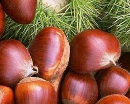 广元市创新方式 建立健全农产品质量安全检测体系