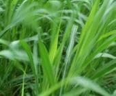 重庆市现代草地畜牧业规模快速发展结构更加优化