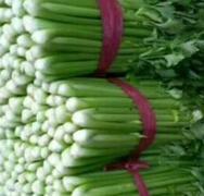 农产品批发价格