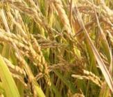 余欣荣主持召开中越农业合作联合委员会首次会议