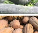 """2月28日""""农产品批发价格200指数"""""""