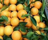 洪江市实施农产品品牌战略 引领现代农业发展