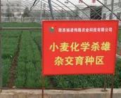 陕西6家种子企业荣获国家A级以上信用等级