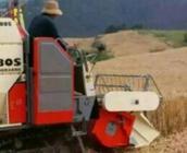 抓好春季麦田管理  夺取今年夏粮丰收