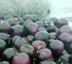 上周食用农产品价格降幅收窄