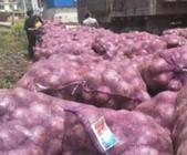"""4月19日""""农产品批发价格200指数"""""""