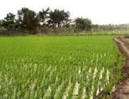 农业部派出5个夏粮及春耕生产督导组