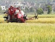 湖南安仁县多措并举保障粮食生产安全