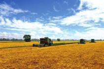 宁夏:农业产业化步伐加快 农村改革稳步推进