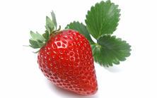 草莓销售遇冷 价格跌大半