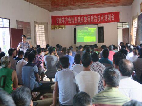 云南德宏州甘科所甘蔗科技培训进村服务