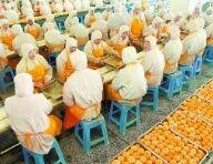 全国农产品加工科技创新推广活动在合肥举办