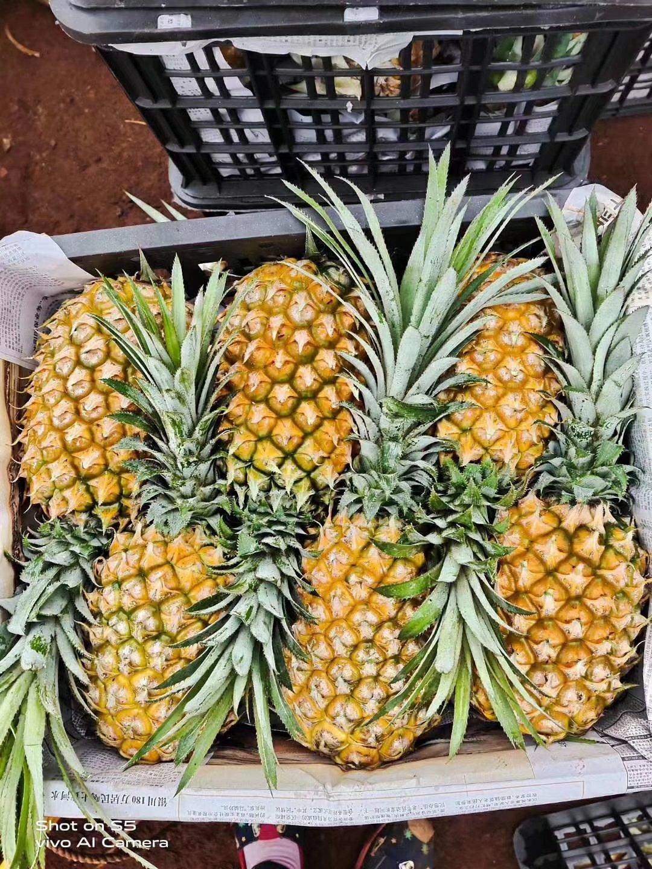 精品海南菠萝 口感甜 不黑心 无黑刺 保质保量 量大价忧