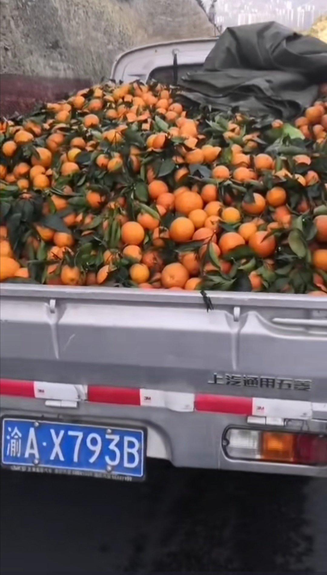 奉节脐橙高次果,商品果好甜好甜额