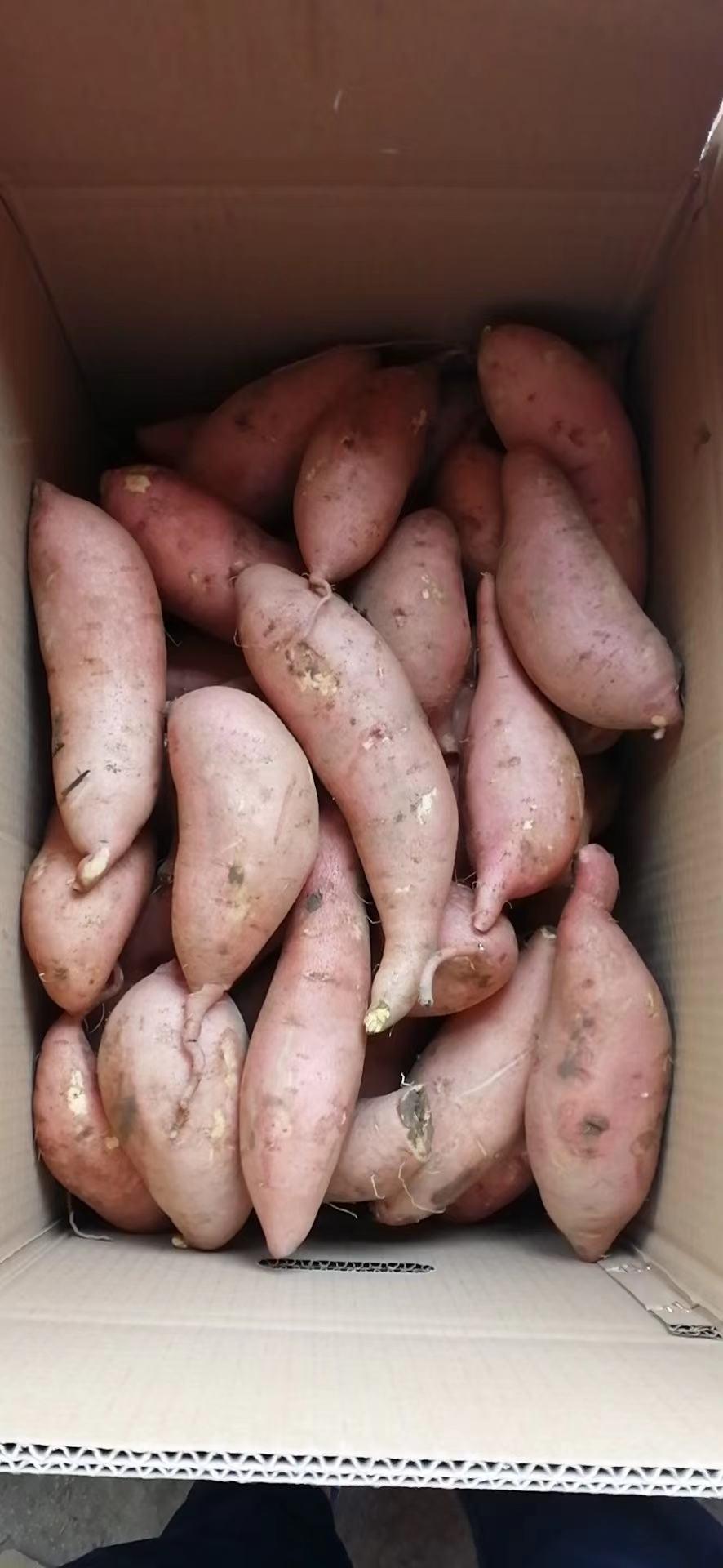 龙薯九商品薯和小红薯