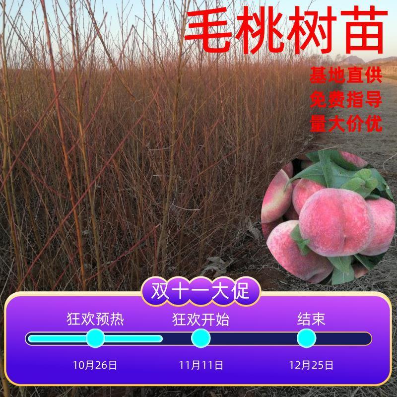 毛桃苗,河北产地一到两年生桃树苗,现挖现卖保证成活率