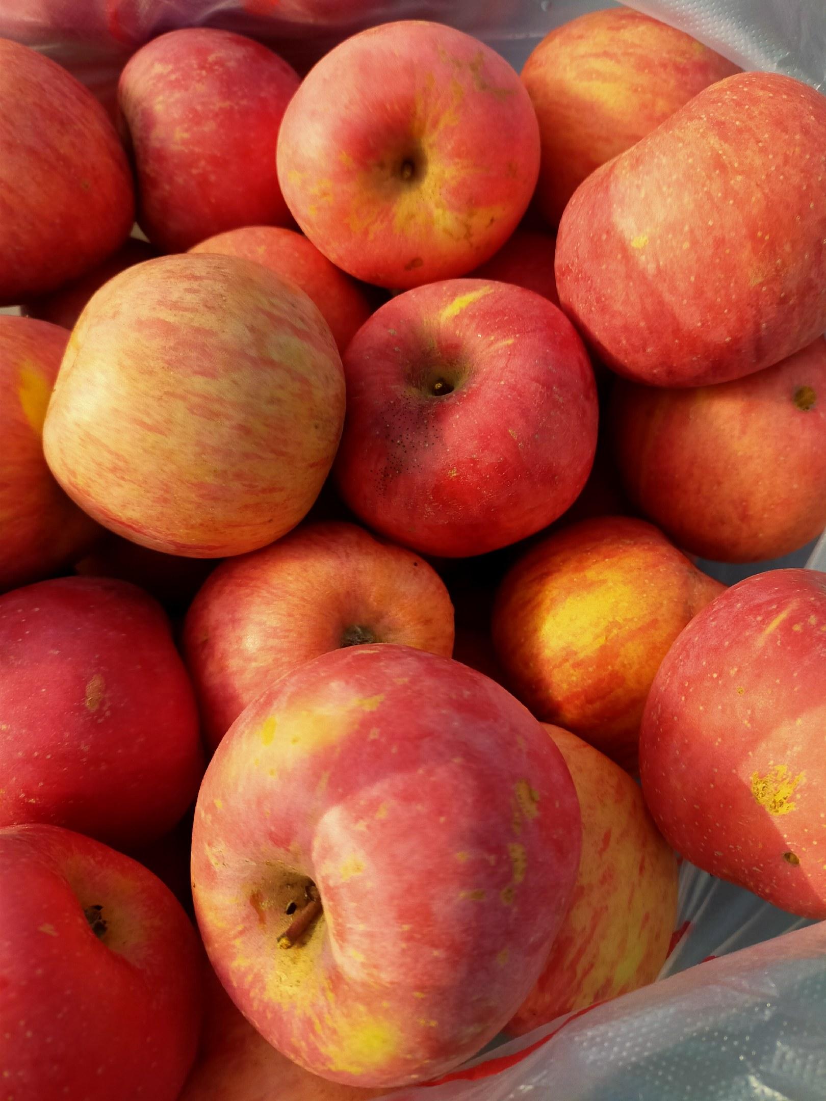 苹果70以上高次现在都是冷库货红富士