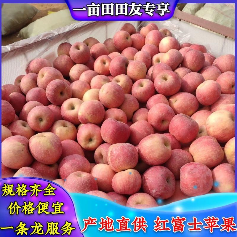 山东红富士苹果,75起步,条纹,规格齐全,一手货专供商超