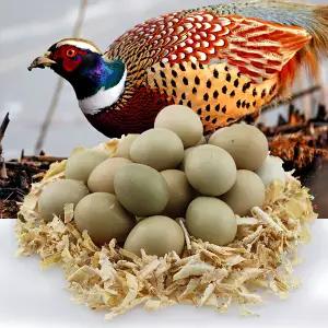 【宝宝营养蛋】七彩山鸡蛋野鸡蛋正宗农家散养新鲜鸡蛋营养高