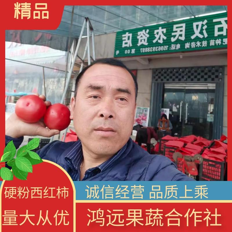 【精品】硬粉西红柿 对接批发 商超专供 一手货源